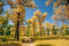 De Manierweg van de wegweg op Sunny Day In Autumn Forest-Hout Stock Afbeeldingen