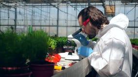 De mannelijke agronoom analyseert chemische producten onder een microscoop stock videobeelden