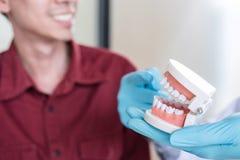 De mannelijke arts of de tandarts die met kaak werken modelleert en adviseert patiënt aan behandeling bij kliniek royalty-vrije stock afbeeldingen