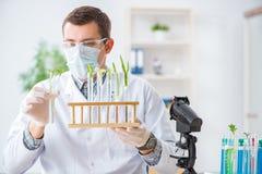 De mannelijke biochemicus die in het laboratorium aan installaties werken royalty-vrije stock foto's