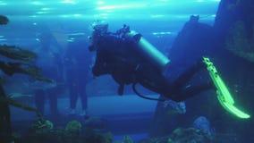 De mannelijke duiker met scuba-uitrusting zwemt binnen groot aquarium met tropische vissen, bezoekers in tunnel stock video