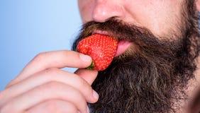 De mannelijke gezichtsbaard probeert aardbei Gastronomisch genoegen Wensconcept Mondeling genoegen Geniet van sappige rijpe rode  royalty-vrije stock foto
