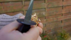 De mannelijke hand verwijdert shell met een verse oester stock footage