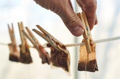 De mannelijke handen hangen gebruikte theezakjes voor het drogen Stock Foto's