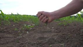 De mannelijke landbouwershanden houdt een handvol van grond en het gieten van het achter door zijn vingers op het gebied Jonge me stock videobeelden