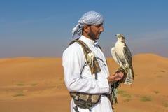 De mannelijke sakervalk tijdens een valkerijvlucht toont in Doubai, de V.A.E Stock Afbeeldingen