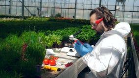 De mannelijke specialist analyseert groenten onder microscoop stock videobeelden