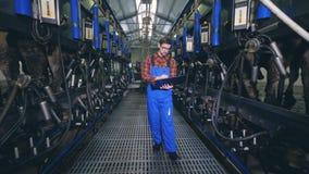 De mannelijke specialist controleert en regelt melkende machines stock footage