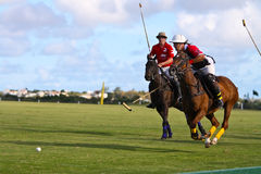 De mannelijke Speler van het Polo Royalty-vrije Stock Afbeelding