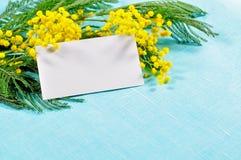 8 de março cartão - o cartão branco na mimosa floresce Imagem de Stock
