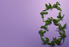 8 de março das flores verdes em uma luz - fundo violeta Cartão de cumprimentos com flores Fundo com lugar para seu texto Fotos de Stock Royalty Free