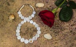 8 de março, flor da rosa do vermelho e shell Fotografia de Stock Royalty Free