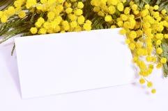 8 de março fundo - o cartão branco com espaço para o texto na mimosa floresce Foto de Stock Royalty Free