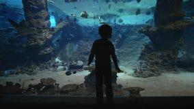 De mariene dieren in dierentuin, silhouet van jong geitjejongen onderzoekt vissen en pijlstaartroggen in grote oceanarium met ond stock video