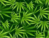 De marihuana verlaat naadloos patroon stock foto
