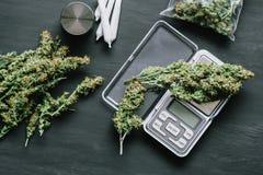De de marihuanacannabis van de denneappelbloem in de handen van een mens op een donkere achtergrond wiedt hoogste mening Royalty-vrije Stock Foto's