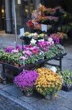 De markt van bloemen royalty-vrije stock foto's