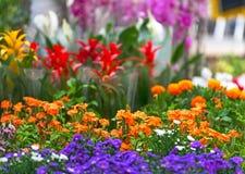 De markt van de bloem royalty-vrije stock fotografie
