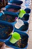 De markt van de goudvis in Thailand Royalty-vrije Stock Afbeeldingen