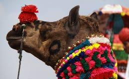 De Markt van de kameel. Stock Afbeelding