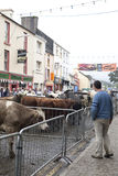 De Markt van de Puck van de Verkoop van het Vee van de straat Royalty-vrije Stock Foto