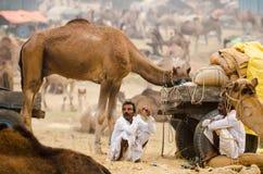 De Markt van de Pushkarkameel, Rajasthan, India Stock Foto