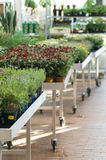 De markt van de tuin Royalty-vrije Stock Afbeeldingen
