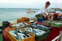 De markt van vissen Stock Fotografie