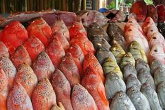 De markt van vissen Stock Foto