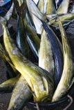De markt van vissen in Hongkong Royalty-vrije Stock Foto