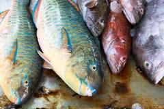 De markt van vissen in Hongkong Royalty-vrije Stock Afbeeldingen