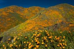15 DE MARZO DE 2019 - LAGO ELSINORE, CA, los E.E.U.U. - amapolas de California estupendas de la floraci?n en Walker Canyon fuera  imágenes de archivo libres de regalías