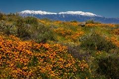 15 DE MARZO DE 2019 - LAGO ELSINORE, CA, los E.E.U.U. - amapolas de California estupendas de la floraci?n en Walker Canyon fuera  imagenes de archivo