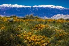 15 DE MARZO DE 2019 - LAGO ELSINORE, CA, los E.E.U.U. - amapolas de California estupendas de la floraci?n en Walker Canyon fuera  imagen de archivo libre de regalías