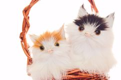 De mascottes van katten Stock Afbeeldingen