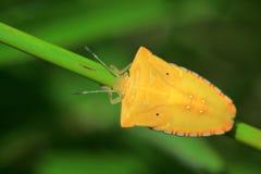 De massa van het insect in Azië Royalty-vrije Stock Fotografie