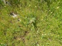 De mauvaise herbe fleur mauvaise pr? loin photo libre de droits