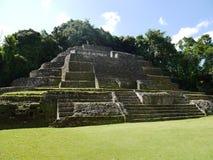 De mayan Jaguar-Tempel in Lamanai in Belize Stock Foto's