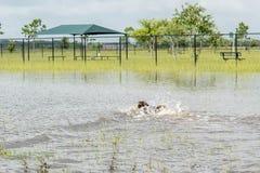 30 de mayo de 2015 - Beverly Kaufman Dog Park, Katy, TX: el jugar de los perros Foto de archivo