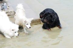 De mededeling van honden stock afbeeldingen