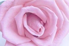 De medio rode bloem steeg dicht Royalty-vrije Stock Foto