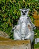 De meditatie is de weg aan verlichting Royalty-vrije Stock Afbeelding