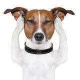 De meditatie van de hond Royalty-vrije Stock Foto's