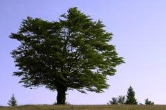 De meester van de boom stock fotografie