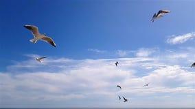 De meeuwen vliegen boven tegen de hemel in goed weer Grotere witte zeemeeuwen op de achtergrond van de hemel stock footage