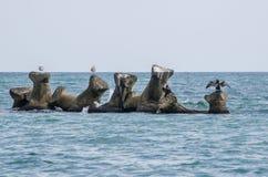 De meeuwen zorgt over voor Royalty-vrije Stock Foto's