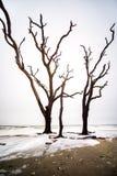 De megalitische boom verdrinkt in het overzees royalty-vrije stock foto