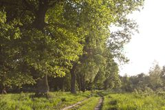 De Meinweg, Limburg, De Meinweg, Netherlands royalty free stock image