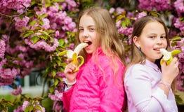 De meisjes eten banaan Jonge geitjes die van sakura van de kersenbloesem genieten Gelukkige de lentevakantie De lente in plantkun royalty-vrije stock foto's