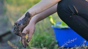 De meisjes` s handen zijn vuil, na het planten van tomaten en kool stock footage